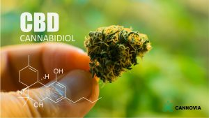 Clearing up myths and misconceptions about CBD • Cannovia CBD - Better Wellness, Naturally