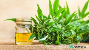 CBD Manufacturer Cannovia Continues to Support the Nation During the Pandemic Crisis • Cannovia CBD - Better Wellness, Naturally