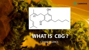 What is CBG? | Cannovia CBD